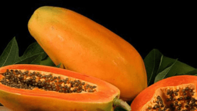 Photo of Investigan a la papaya mexicana por brote de salmonella en Estados Unidos