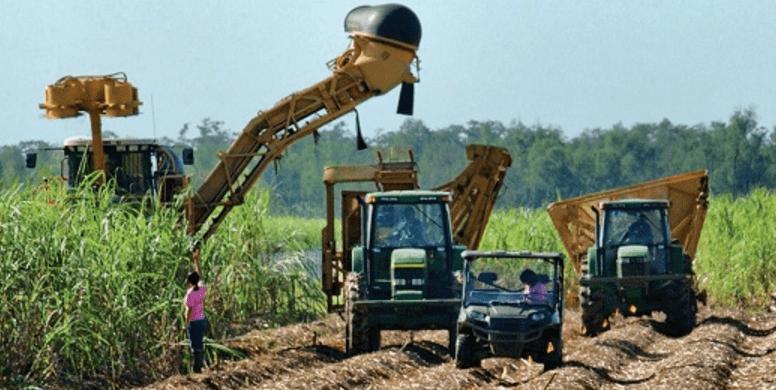 A partir de 2008 y hasta diciembre de 2014, a las exportaciones de azúcar de México se les concedió un acceso sin restricciones de volumen y sin aranceles al mercado de Estados Unidos, bajo el Tratado de Libre Comercio de América del Norte (TLCAN).