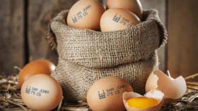 Photo of México se consolida como el mayor consumidor per cápita de huevo del mundo