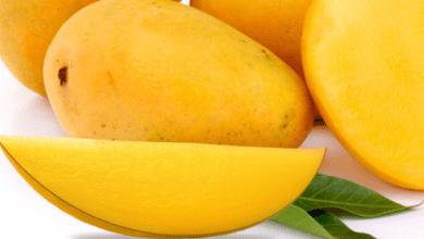 Photo of México rompe récord en exportaciones de mango fresco y deshidratado a EEUU