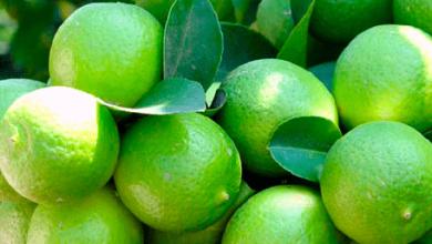 Photo of México rompió récord en exportaciones de limones en 2017