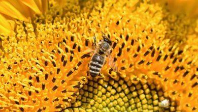 Photo of ¿Cuánto le costará al mundo no cuidar las abejas?