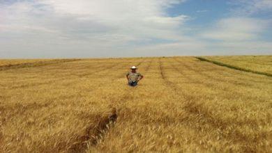 Photo of ¿Qué Estados Unidos pelea en agricultura con Canadá?