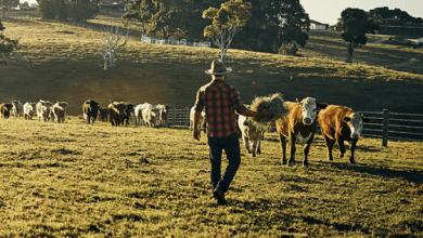Photo of México eliminará aranceles a la carne de bovino en el CPTPP