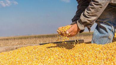 Photo of México depende de importaciones de maíz transgénico