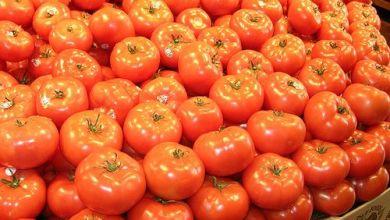 Photo of Subirían precio de exportaciones de tomates orgánicos