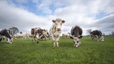 Photo of El CPTPP abre importaciones de 1,000 ton de leche condensada