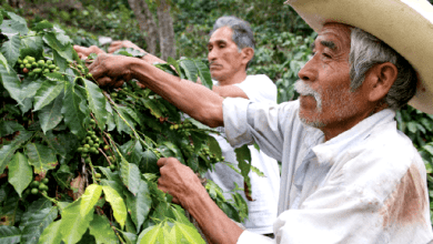Photo of Nestlé invierte US$ 154 millones en planta de café en México