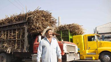Photo of México tiene cupo para exportar 811,513 ton de azúcar a EU