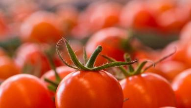 Photo of Establecen precios de referencia para exportaciones de tomates
