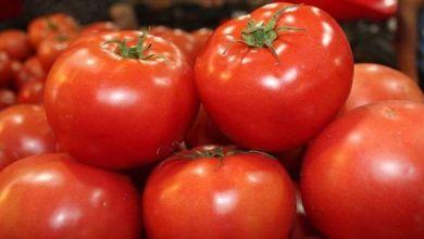 Las exportaciones mexicanas de tomates en juli, sumaron 124.1 millones de dólares.