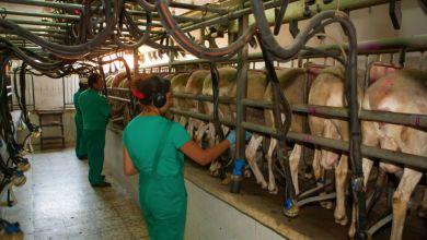 Photo of La UE y el Mercosur se otorgarán cupos en queso y leche
