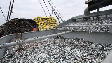 Photo of Perú lidera exportaciones de harina de pescado en el mundo