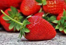 Photo of Las exportaciones de fresas de México a EU subieron 44% en 2019