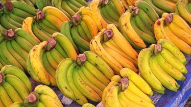 Photo of Exportaciones mexicanas de plátano a Japón rompen récord