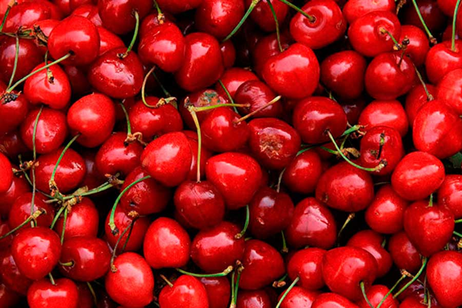 Chilean cherry exports will increase by 13% in the 2019/2020 marketing year, reaching 259,000 tons, estimated the United States Department of Agriculture (USDA).