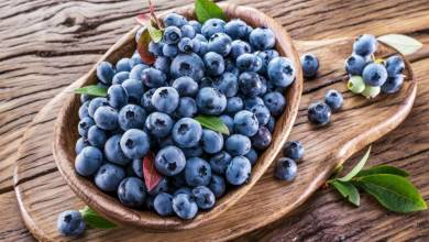 The United States announced that it will initiate a safeguard investigation against imports of blueberries originating in Mexico