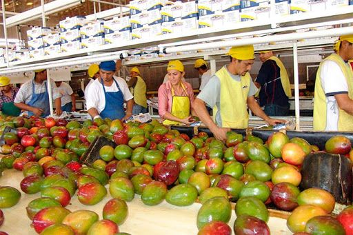 Mexico's agricultural exports accumulated 10.567 million dollars from January to July 2020, according to data from the Ministry of Agriculture.