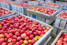 Las importaciones de manzanas frescas de México desde Estados Unidos cayeron 11.8% de enero a septiembre de 2020, año contra año, a 187.1 millones de dólares, de acuerdo con datos del gobierno estadounidense.