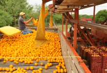 The United States increased its imports of fruits and vegetables from Mexico in the most recent fiscal year (October 2019-September 2020), according to data from the Department of Agriculture.