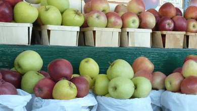 Exports of apples, pears and quinces from the United States totaled $ 994 million in 2020, a decrease of 12.1% year-on-year.