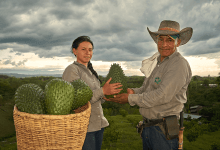 Anabana es una empresa productora y procesadora de guanábana certificada por Global GAP y ubicada en la región central de Colombia. Anabana is a soursop producer and processor certified by Global GAP and located in the central region of Colombia.