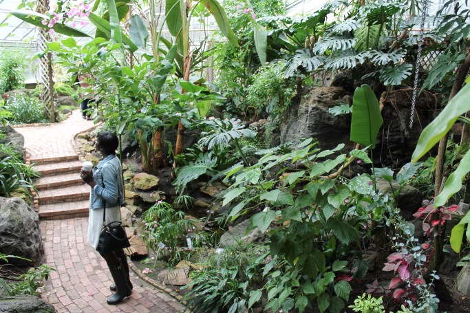 tropical plant and butterfly showhouse