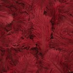 Dyed ostrich feathers