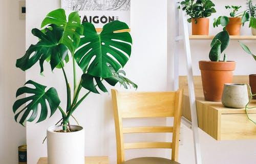 Stylish Ways to Decorate Your Home with Houseplants