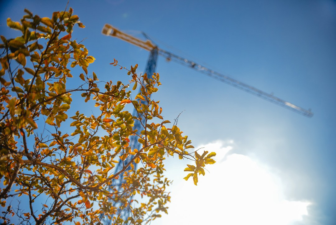 construction-industry-crane-leaves-BD