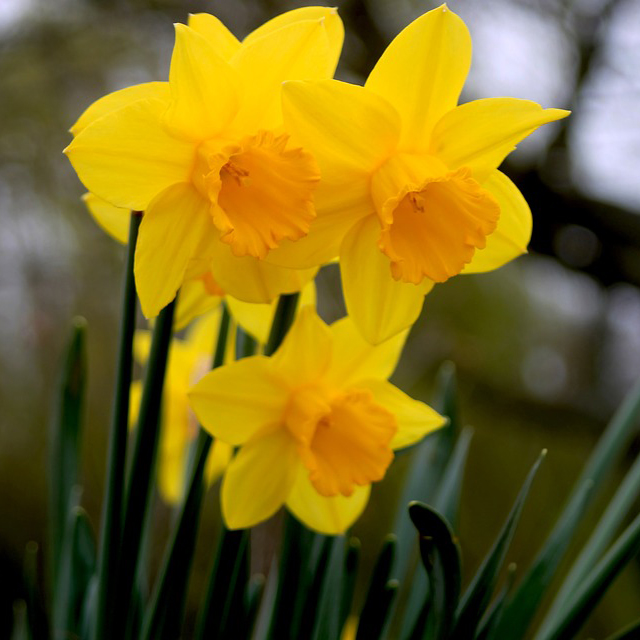 The Prodigy Flowers & Bulbs Module