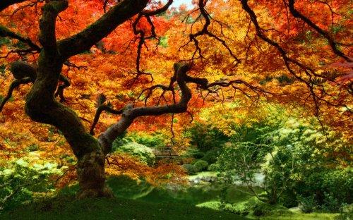 calendrier automne