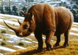 rinocer viziune scăzută