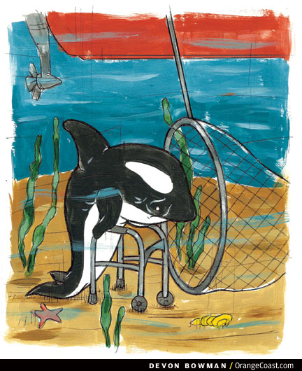 OC Answer Man The First Capture Of A Killer Whale Was In Newport Harbor Orange Coast