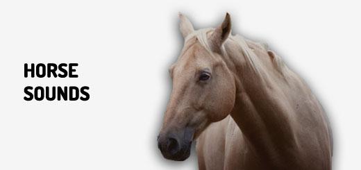 Horse Sounds | Orange Free Sounds