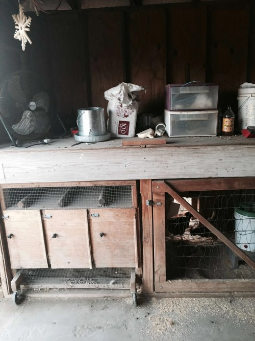 clever chicken coop made from scrap wood