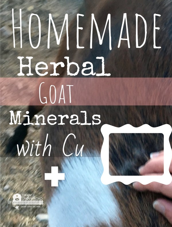 Homemade Herbal Goat Minerals With Copper+ {Coat Changing COLOR}