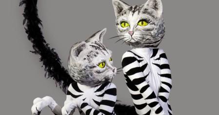 ZooZoo cats