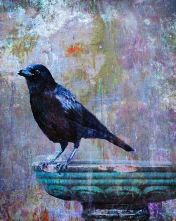 """Crow on Birdbath"" by Nancy Abens, is included in the ""...a thing with feathers"" show at the Lincoln City Cultural Center."