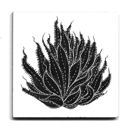 image of a many-leafed succulent