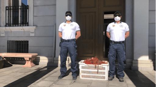 Pesca abusiva con attrezzi non consentiti: 4mila ricci di mare per multa di 2mila euro