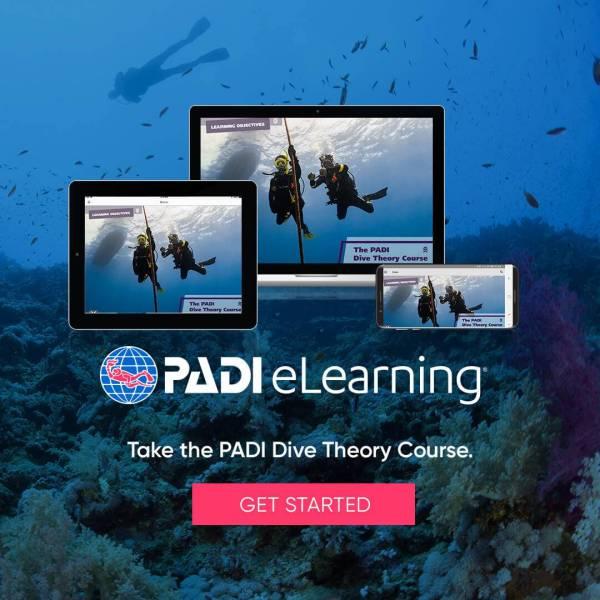Inizia subito uno dei corsi PADI online