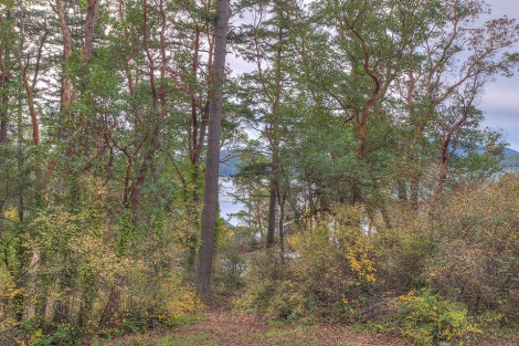 Madrona Point Cottage View