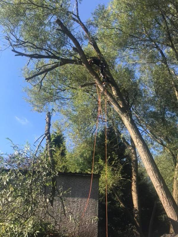 Dangerous Windblown Willow Tree Removal, Eastwood, Nottingham, NG16