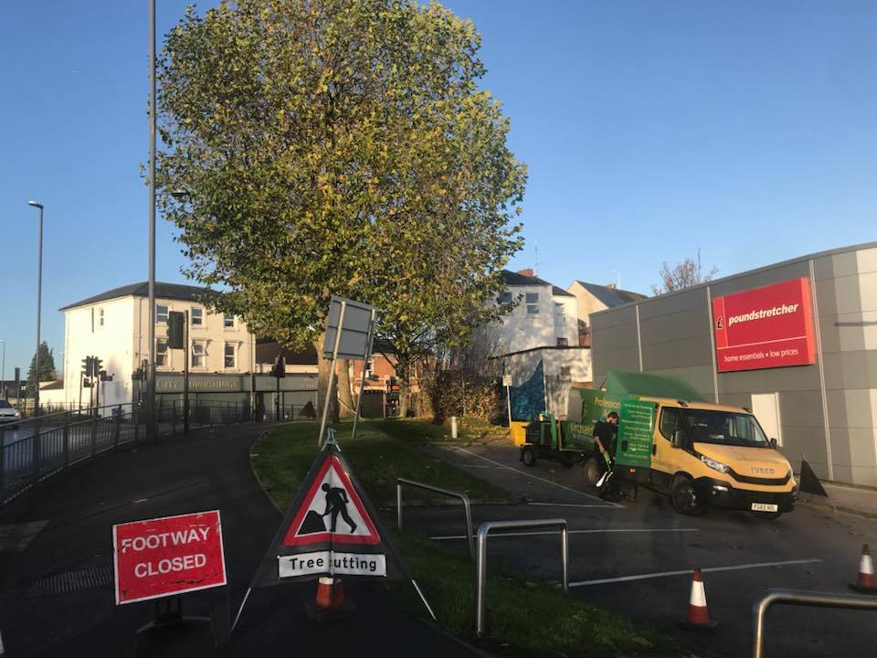 London Plane Tree Crown Reduction & Crown Thinning, Derby, INTU
