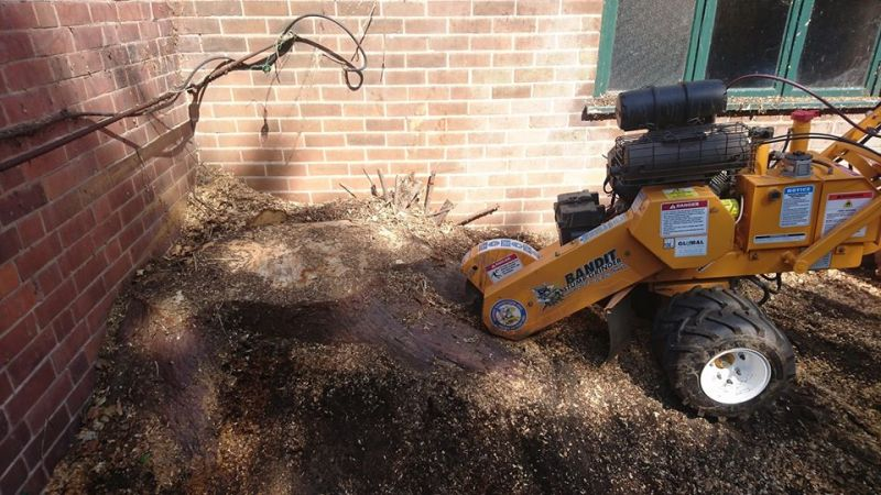 Stump Grinding in The Park, Nottingham, NG7