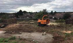 Site Clearance of all trees in Basford, Nottingham