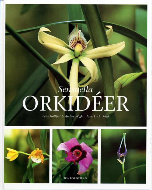 sensuella-orkideer.jpg
