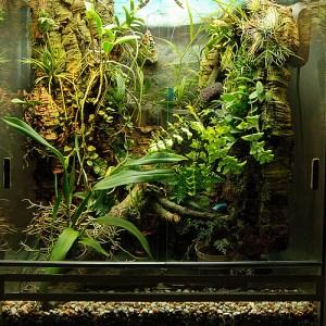 För odlingsskåp / terrarium