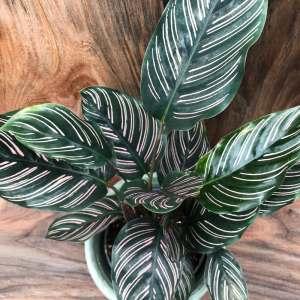 Gröna växter och orkidéer med vackra blad